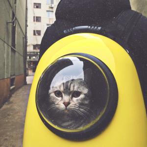 猫も安心、スムーズに病院へ連れて行く3つの方法