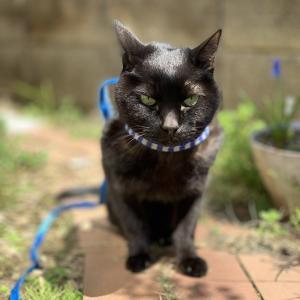 ♥亡くなった猫、おうちにまだいるの?(アニマルコミュニケーションご感想)