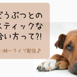 犬猫・家族どうぶつとのホリスティックなつき合い方って?!