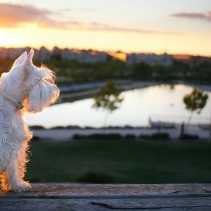 犬猫ペットの死後、タマシイはどこへ?