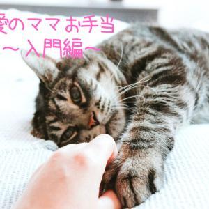 【10/4(日)Zoom】ペットにママお手当をしよう!~入門編~