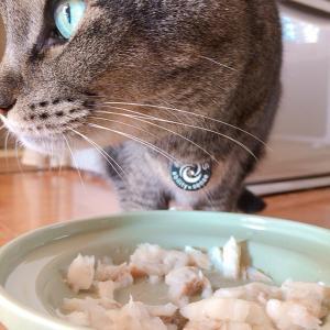 猫の手づくりごはんって贅沢な食べもの?!