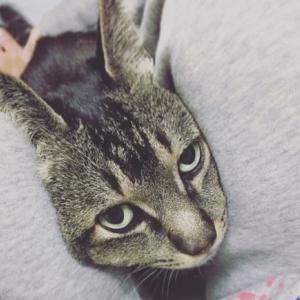 ラズ猫16歳の甲状腺機能亢進症と飼い主の関係
