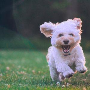 愛犬が虹の橋の向こうから猛ダッシュ!(体験ワークご感想)