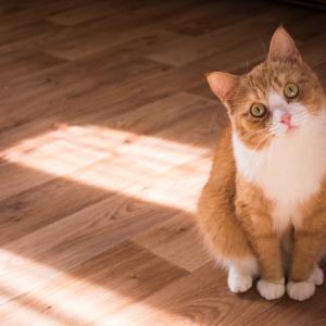 猫は家族をどうやって認識しているのか