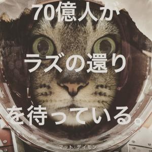 猫は宇宙からやってきた愛のメッセンジャー