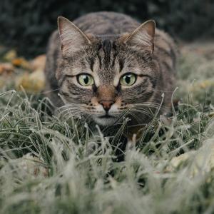 猫の食べものと健康の関係