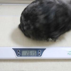 体重測定とこれからの事