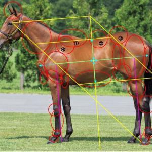 アーモンドアイの馬体を見る