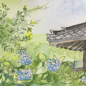 紫陽花と寺