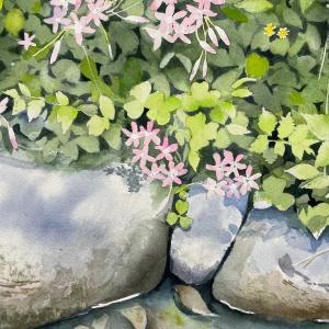 水辺の小さな花