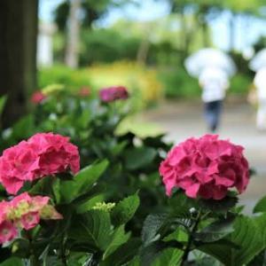 芦刈紫陽花園へ行って来ました。