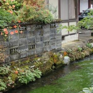 醒ヶ井の梅花藻