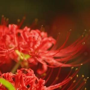 蕎麦の花も彼岸花も咲いていない。