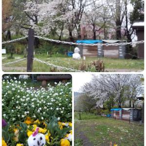 雪とお花と猫たちと(*´ω`*)