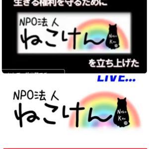 """""""第一回ねこけんオンラインセミナー!始まるよ~&グレーの猫さん"""""""