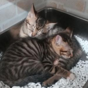 """できることをひとつずつ。 """"猫達の命を救え・JFEホールディングスへの訴え"""""""