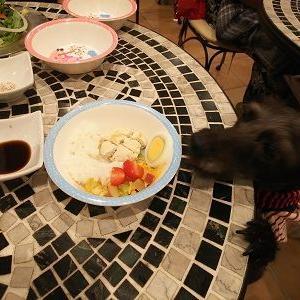 「ドッグカフェAkala」の犬用パンケーキが大きかった