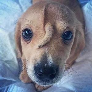 額から「尻尾」の生えた子犬が保護