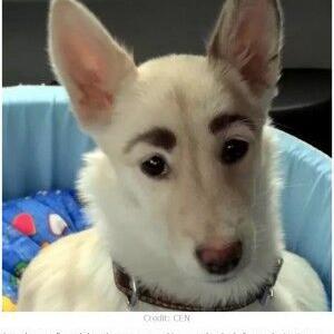 イモトアヤコっぽい眉毛の犬