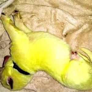 白色の母親から緑色の子犬