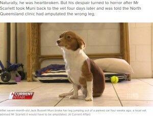 獣医の手違いで異常がない足を切断された犬