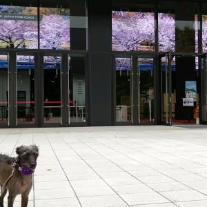 クールジャパンパーク大阪で大阪城の四季を感じる