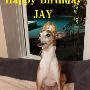 ジェイ13歳になりました
