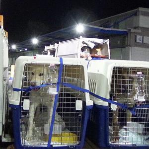 韓国の「食用犬」を日本で初めて保護したというニュース