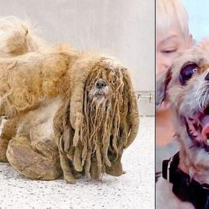 全身の毛が伸び放題の野良犬