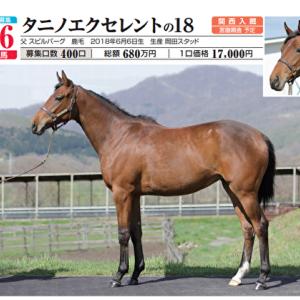 【ノルマンディーOC三次募集馬】No,46 タニノエクセレントの2018(牝2)… 超遅生まれの格安の牝馬が中央で勝ち上がりなるか!?
