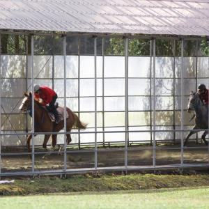 【備忘録】『オータムセール』でノルマンディーファームが落札した4頭の確認作業。【20年10月】