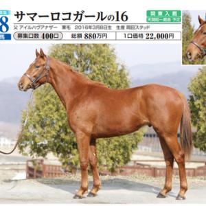 【出資馬ボーイズオブサマー】新潟競馬の3歳未勝利戦で初勝利。