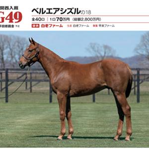 【G1TC募集馬】No,49 ベルエアシズルの2018(牡1)はゴールドアリュール産駒として配合的には期待したい1頭で。
