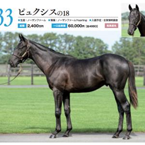 【キャロット募集確定馬】No,33 ピュクシスの2018(牡1)の攻めた配合には好感で。