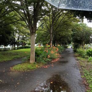 雨の日も速歩