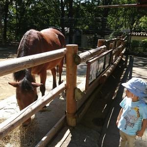 2回目の茶臼山動物園 ☆ 長男3歳3ケ月 (写真多いです!)