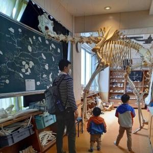 戸隠地質博物館で化石発掘体験 ♡4歳・2歳の頃