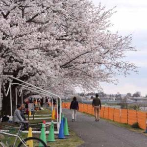 【MTB】多摩川サイクリングロード左岸!②  [今日は郵政記念日]