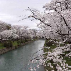 【MTB】多摩川サイクリングロード左岸!⑤  [今日はみどりの日]