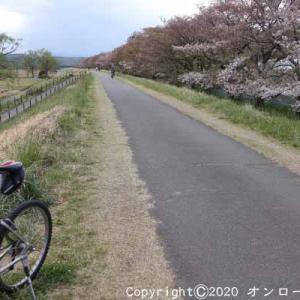 【MTB】多摩川サイクリングロード左岸の葉桜ライド!  [今日は東名高速道路開通記念日]