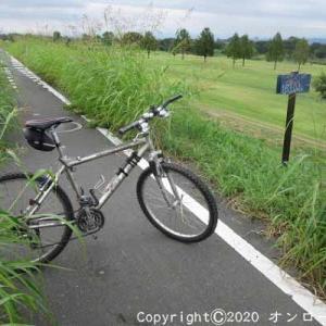 【MTB】利根川自転車道路右岸を走りました! ⑥  [今日は不動産の日]