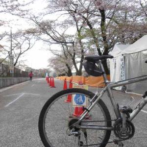 【MTB】多摩川サイクリングロード 羽村堰葉桜ライド! ④   [今日は地図の日]