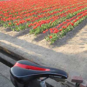 【MTB】多摩川サイクリングロード 羽村堰の先チューリップまつり! ⑥ [今日はかえるの日]