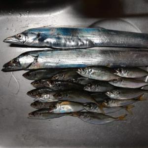 加太大波止でアオリイカ釣りも釣果はタチウオ