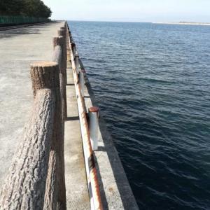 【釣り場ガイド】忠岡テラスと高場は魚影濃いが難多し