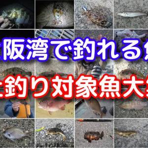 大阪湾で釣れる魚 ~波止釣り対象魚大集合!!~