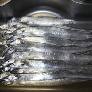 水軒字の一文字で太刀魚釣り~安定の混雑と釣果も、またもや大惨事