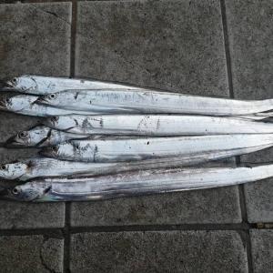 和歌山マリーナシティで太刀魚釣り~釣り場は混雑も鉄板の釣果