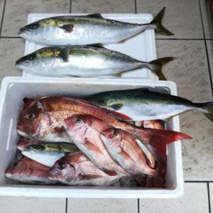 淡路島で真鯛の船釣り まさかのボウズは・・・!